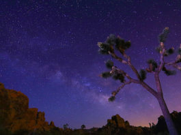 Joshua Tree © Sungjin Ahn